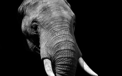Introverts and Elephants